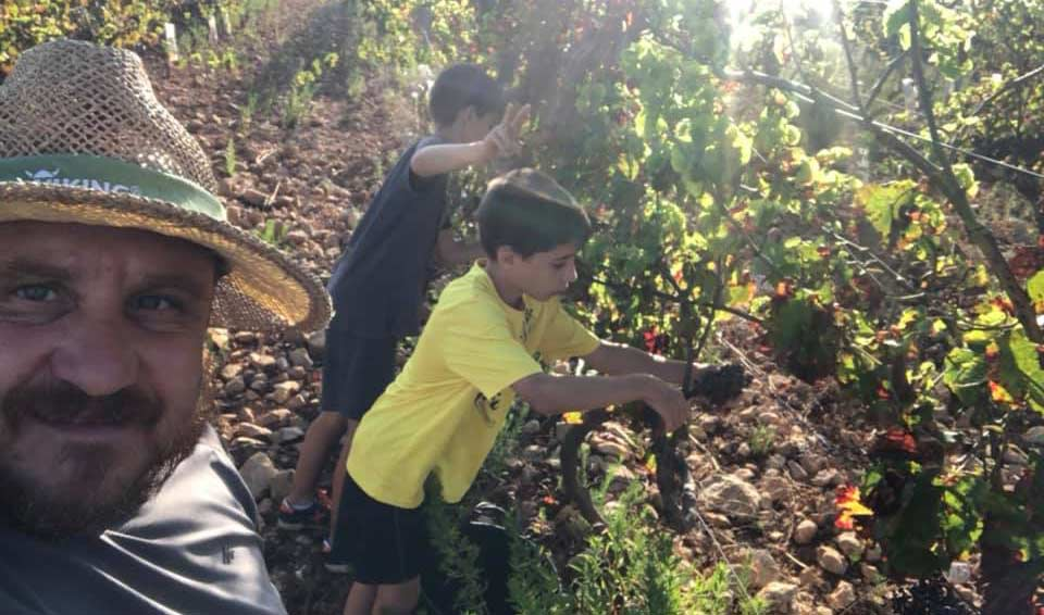 Vendimia 2020 en Bellmunt oliver viticultors