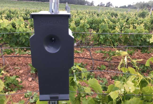 Mas de Rander elimina por completo el uso de pesticidas en sus viñedos
